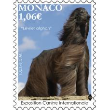 INTERNATIONAL DOG SHOW 2021