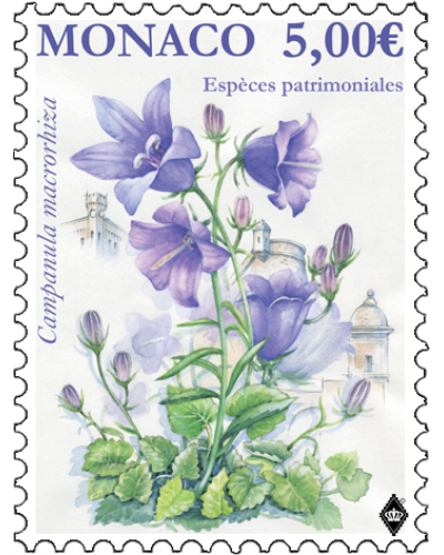 NATIONAL SPECIES - THICK-ROOTED CAMPANULA