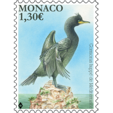 NATIONAL SPECIES - THE MEDITERRANEAN SHAG
