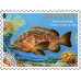 PREFRANKED STAMP - THE DUSKY GROUPER